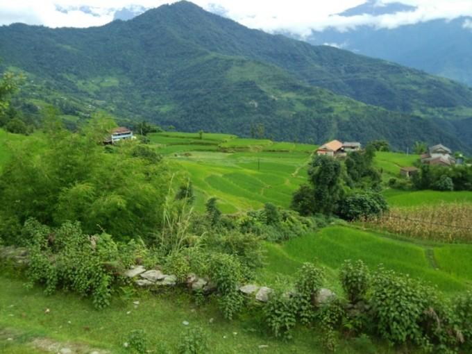 緑がまぶしい。雨季の農村風景。